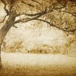 Vintage oak tree — Stock Photo #24199167