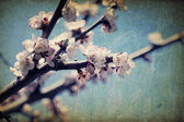 Vintage apple-tree flowers at spring — Stock Photo