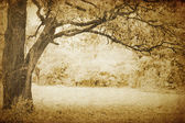 Vintage oak tree — Stock Photo