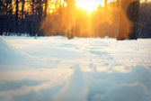 Sunset in park. Winter, Moscow Botanical Garden. — Stock Photo