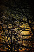 Spooky trees silhouettes. Vintage background — Stock Photo