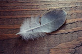 Feather on wooden texture. Closeup shot — Stock Photo
