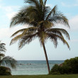 Palm on Beach — Stockfoto #14808569