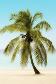 Palm Tree on a Beach — Stock Photo
