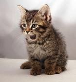 Adorable kätzchen 3 — Stockfoto