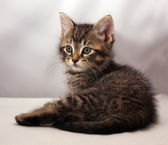 Adorable kitten 4 — Stock Photo