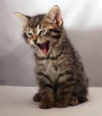 Adorable kitten 9 — Stock Photo