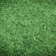 Healthy Grass Texture - Stock Photo