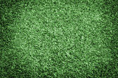 Healthy Grass Texture — Stockfoto