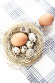 Eggs are in a nest — Stock Photo