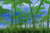 Green plants on the blue sky background — Stock Photo