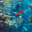 Underwater panorama in a shallow coral reef with colorful tropical fish and water surface in background — Stock Photo