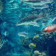Underwater panorama in a shallow coral reef with colorful tropical fish and water surface in background — Stock Photo #16823599