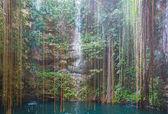 Lianas over water — Stock Photo