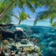Sea with corals and seaplants — Stock Photo