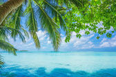 Maldives with palm, sand and ocean — Stock Photo