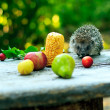Stock Photo: Hedgehog among fruits