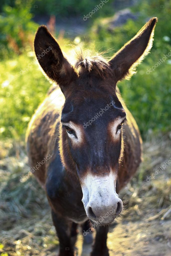 A (backlit) donkey in a farmland — Foto Stock #12066235