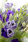 Close-up bouquet of blue flowers — Stock Photo