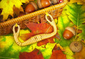 Acorns and basket — Stock Photo