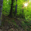 Stock Photo: Summer forest, sun