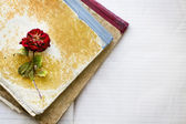 Dead rose on two dirty old notebooks  — Stock Photo