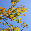 Colored fresh new leaves — Stock Photo #8778946