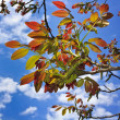 Colored fresh new leaves — Stock Photo #8910667