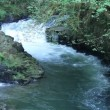 Waterfall and River Rapidly Flowing — Stock Video #13661249