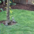 Stock Video: Two Squirrels Eating Together