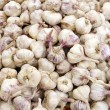 Italian Garlic Bulbs - Stock Photo