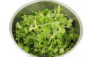 Watercress in a Stainless Steel Bowl — 图库照片