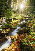 Spring running through forest — Stock Photo
