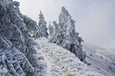 Winter trees in mountains — Stock Photo