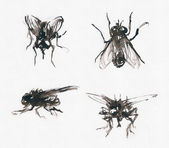 Sketchy flies — Stock Photo
