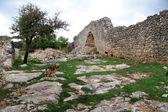 Pies i ruiny — Zdjęcie stockowe