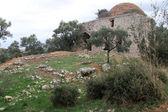 Ruines et l'herbe verte — Photo