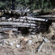 Log house — Photo
