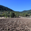 Plowed land — Stock Photo #34848087