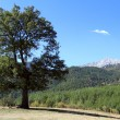 Lonely tree — Stock Photo #34859303
