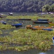 Boats in Pokhara — Stock Photo