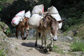 Donkeys — Stock Photo