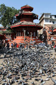 Doves in Khatmandu — Stock Photo