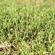 Green grass in spring — Stock Photo