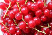 Fresh Redcurrants — Stock Photo