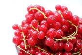 Fresh Redcurrants — Stock fotografie