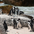 Stock Photo: Boulders beach