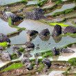 Green rice terraces — Stock Photo