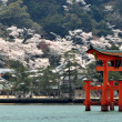 Torii gate at Miyajima, Hiroshima - Japan — Stock Photo