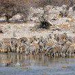 Zebras at waterhole — Stock Photo #33191075